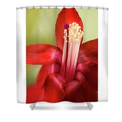 Awe Of Nature Shower Curtain