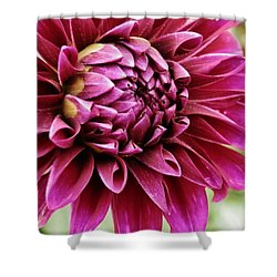 Awesome Dahlia Shower Curtain by VLee Watson