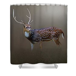 Axis Deer Shower Curtain by Marion Johnson