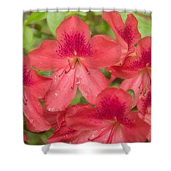 Azalea Blossoms Shower Curtain