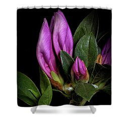Shower Curtain featuring the photograph Azalea Buds by Richard Rizzo
