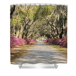azalea lined road in Spring Shower Curtain