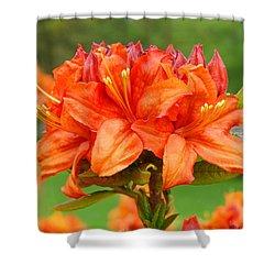 Azaleas Orange Red Azalea Flowers 11 Botanical Giclee Art Baslee Troutman Shower Curtain by Baslee Troutman