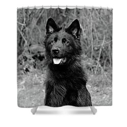 Shower Curtain featuring the photograph Aziza  by Sandy Keeton