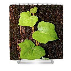 Azores Endemic Hedera Shower Curtain by Gaspar Avila