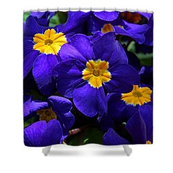 Shower Curtain featuring the photograph Azure Primrose by Michiale Schneider
