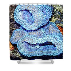 Azure Vase Sponge Impossible Blue Shower Curtain