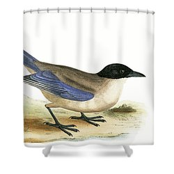Azure Winged Magpie Shower Curtain by English School