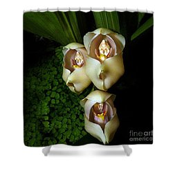 Babies In The Cradle - Floral Oddity Shower Curtain by Merton Allen