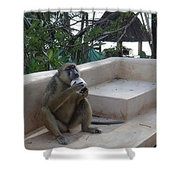 Baboon With A Sweet Tooth Shower Curtain