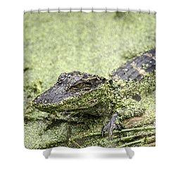 Baby Alligator Shower Curtain