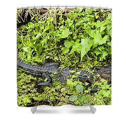 Baby Alligator Shower Curtain by Marilyn Hunt