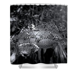 Baby Alligators On Board Shower Curtain by Mark Andrew Thomas