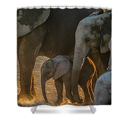 Baby And Siblings Shower Curtain