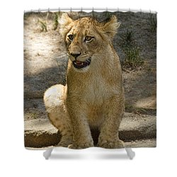 Shower Curtain featuring the photograph Baby Baby by Cheri McEachin