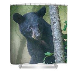 Baby Bear Takes A Peek Shower Curtain