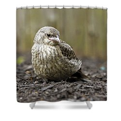 Baby Bird Shower Curtain by Denise Pohl
