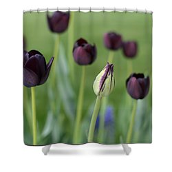 Shower Curtain featuring the photograph Baby Bloomer by Linda Mishler