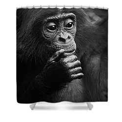 Shower Curtain featuring the photograph Baby Bonobo by Helga Koehrer-Wagner