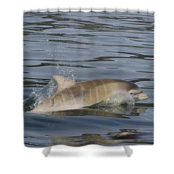 Baby Bottlenose Dolphin - Scotland  #35 Shower Curtain
