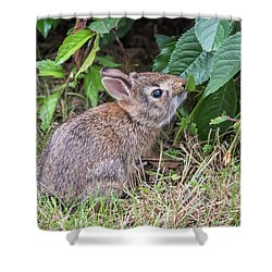 Baby Bunny Eating Leaf Shower Curtain