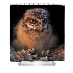 Baby Burrowing Cuteness Shower Curtain