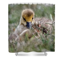 Baby Canada Goose Hidden In The Grasses Shower Curtain