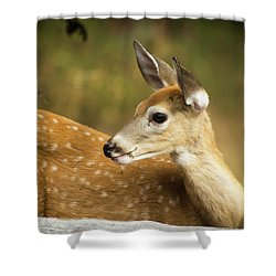 Shower Curtain featuring the photograph Baby Deer by Tyra OBryant
