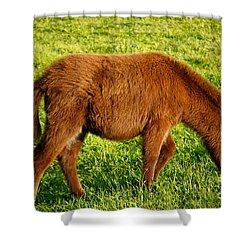 Baby Donkey Shower Curtain by Gaspar Avila