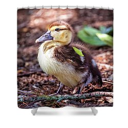 Baby Duck Sitting Shower Curtain by Stephanie Hayes
