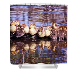 Baby Ducks On A Log Shower Curtain by Stephanie Hayes