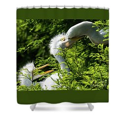 Baby Egrets Being Feed Shower Curtain