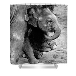 Baby Elephant Security Shower Curtain