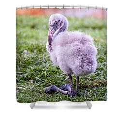 Baby Flamingo Sitting Shower Curtain by Stephanie Hayes