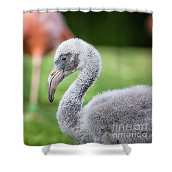 Baby Flamingo With Mom In Background Shower Curtain