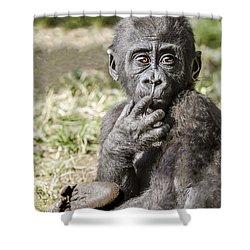 Baby Gorilla Portrait Shower Curtain