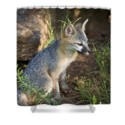 Baby Gray Fox Resting On Bluff Side Shower Curtain by Michael Dougherty