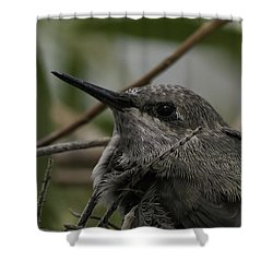 Baby Humming Bird Shower Curtain
