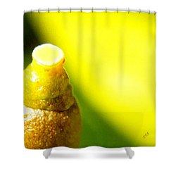 Baby Lemon On Tree Shower Curtain by Ben and Raisa Gertsberg