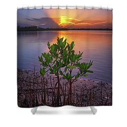 Baby Mangrove Sunset At Indian River State Park Shower Curtain by Justin Kelefas