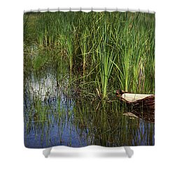 Baby Moses In The Reeds Shower Curtain