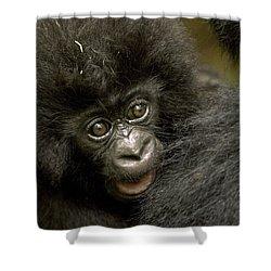 Baby Mountain Gorilla  Shower Curtain by Ingo Arndt