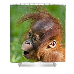 Baby Orangutan Shower Curtain