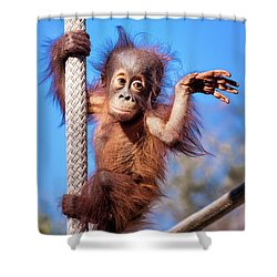 Baby Orangutan Climbing Shower Curtain by Stephanie Hayes
