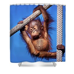 Baby Orangutan Hanging Out Shower Curtain by Stephanie Hayes