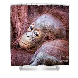 Baby Orangutan Shower Curtain by Stephanie Hayes