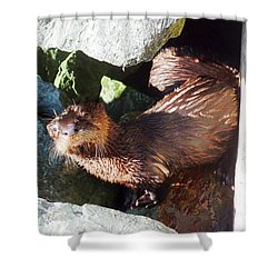Baby Otter Checking Us Out Shower Curtain by Karen Molenaar Terrell