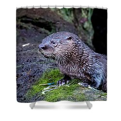 Shower Curtain featuring the photograph Baby Otter by Kelly Marquardt