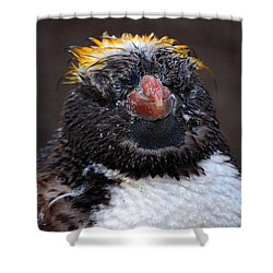 Baby Penguin Shower Curtain by Rob Hawkins