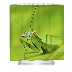 Baby Praymantes 6661 Shower Curtain